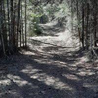 road through woods