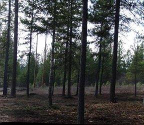 trees_property